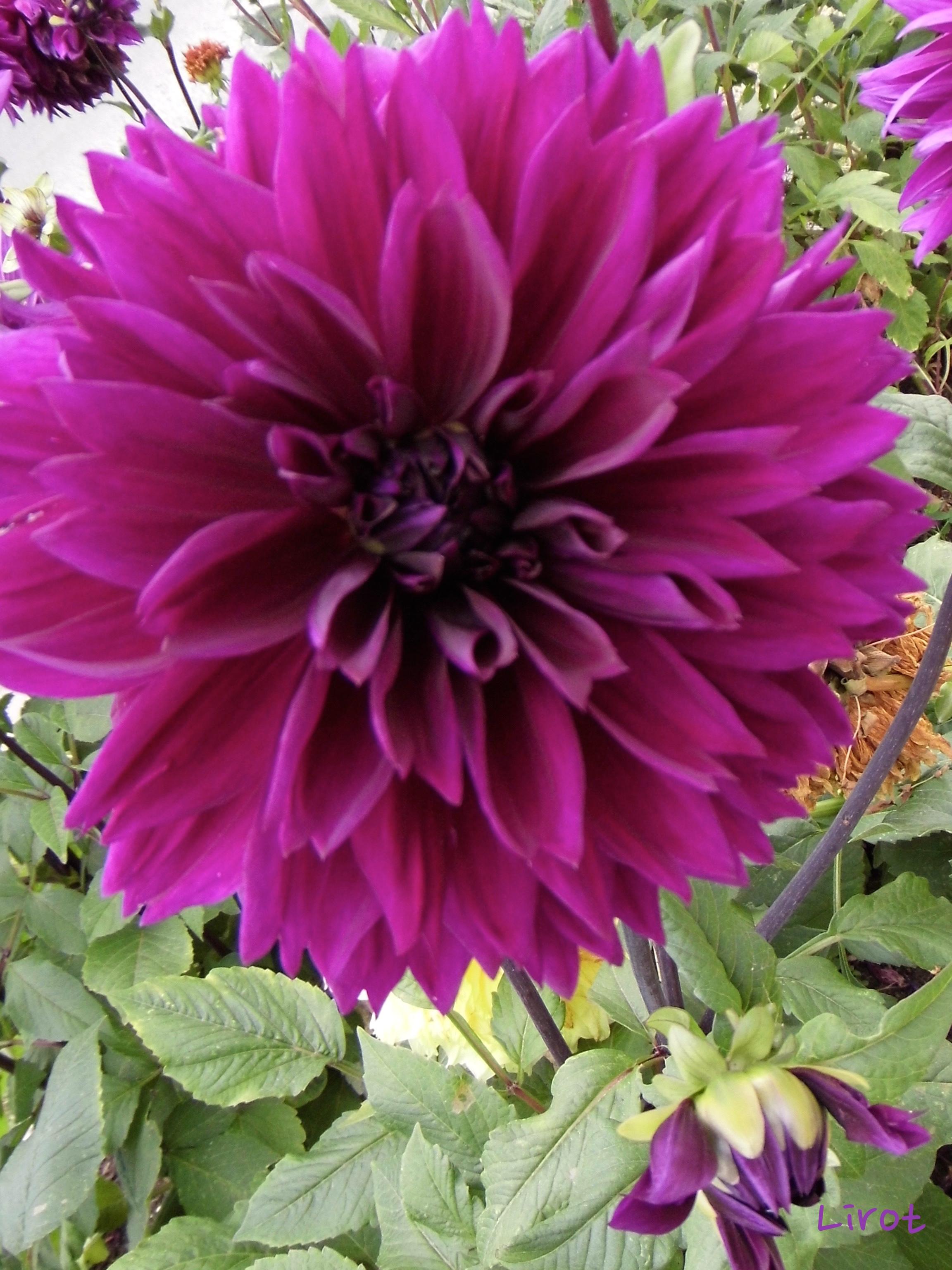 Bouddha éveil dharma illumination paramitas conscience Catherine Lirot